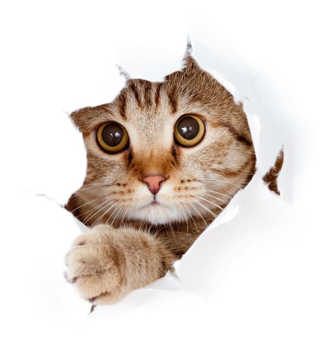 Bild Erziehung der Katze