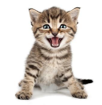 grinsende Katze / Katzennamen