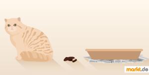 Bild Katze neben Katzenklo