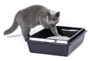 Bild Katze steigt ins Katzenklo