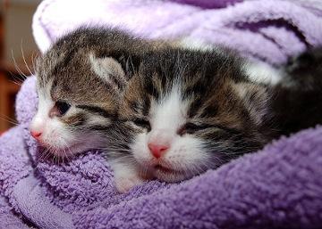 Katzenbabys in Handtuch gewickelt