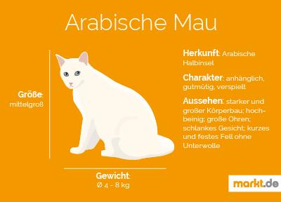 Grafik Rasseportrait Arabische Mau