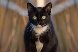 Bild aufmerksame Katze