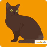 Burma-Katze