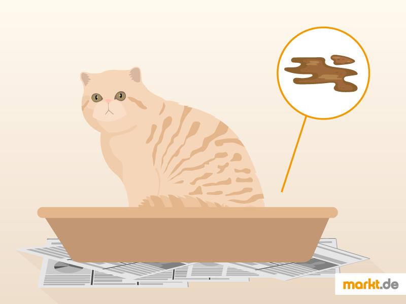 Was Tun Wenn Die Katze Durchfall Hat Marktde