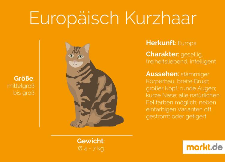 Europäisch Kurzhaar Rasseportrait   markt.de