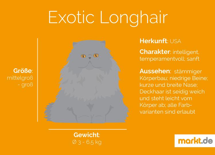 Exotic Longhair Charakter Pflege Und Zucht Markt De