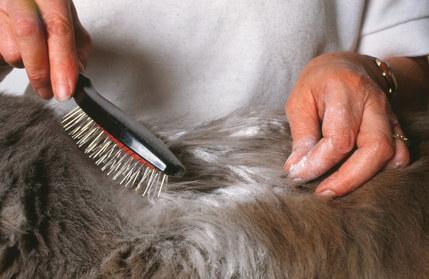 Fellpflege Katze