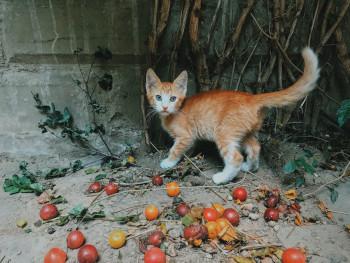 Fleischgehalt im Katzenfutter