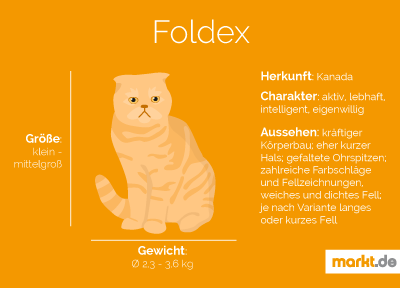 Rasseportrait der Foldex