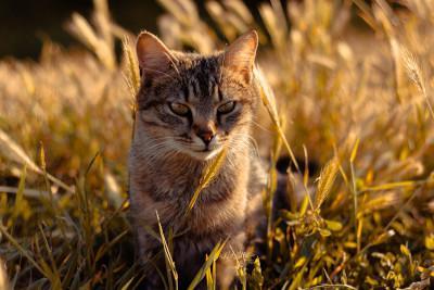 Ist Getreide im Katzenfutter schädlich?