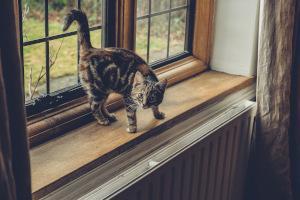 Junge Katze markiert Fenster