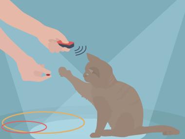 Grafik Katze Clickertraining