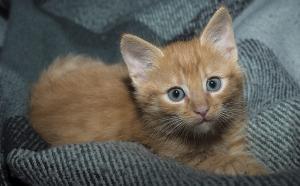 Katzenbaby auf einer Decke