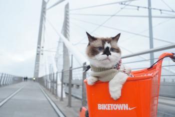 Reisegepäck Katze