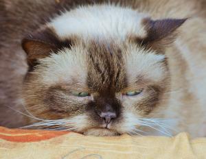 Unzufriedene Katze markiert