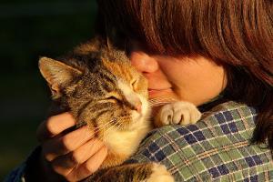 Bild Katze und Mensch kuscheln