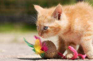 Kitten mit Spielzeug