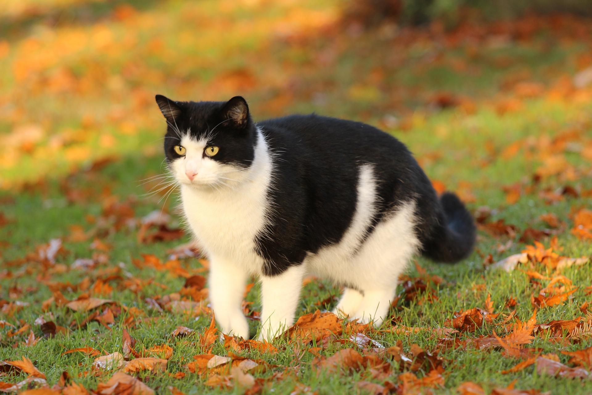 Bild Katze auf Wiese