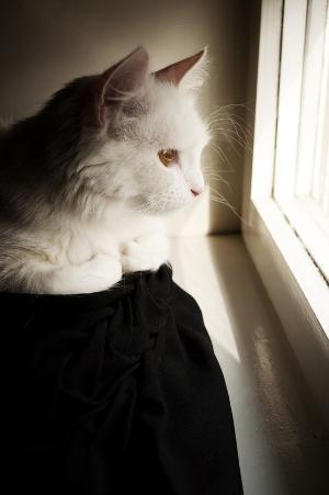 Bild trauernde Katze