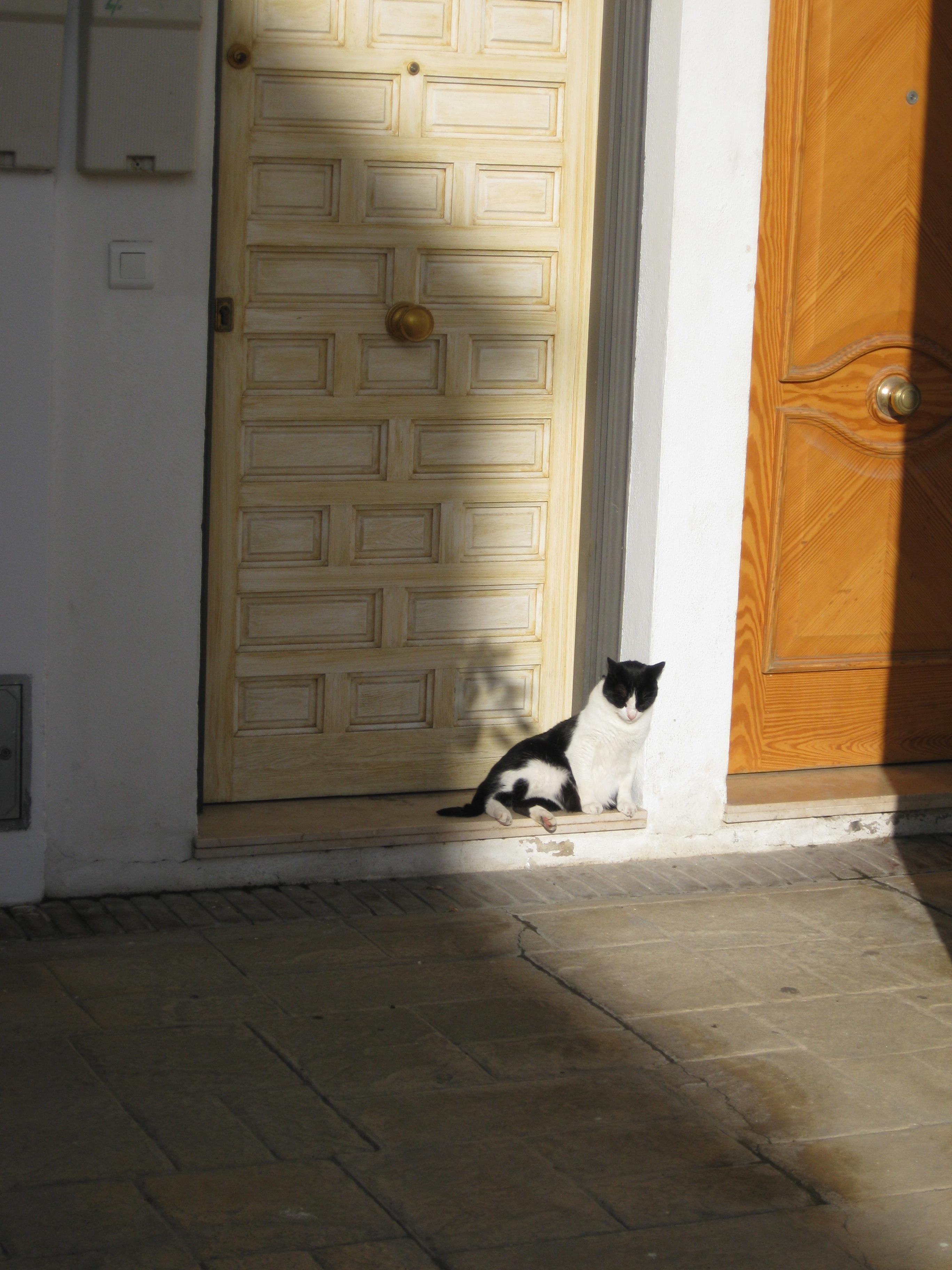 Türkratzen bei Katzen – Das können Sie tun! | markt.de