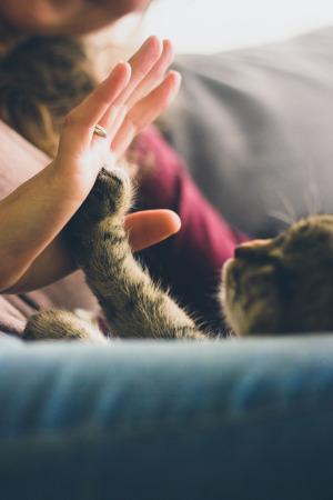 Katze wehrt Hand ab