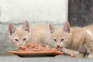 Katzen fressen aus einem Napf