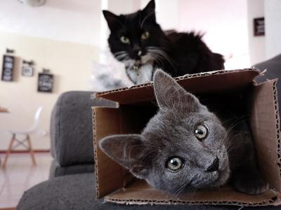 Katze in der Wohnung