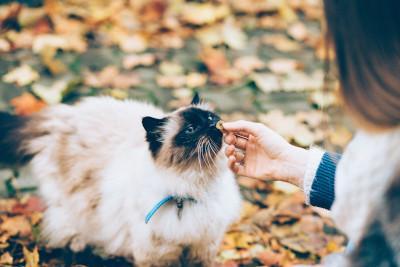 Gesunde Katzen Leckerli und Snacks zur Belohnung