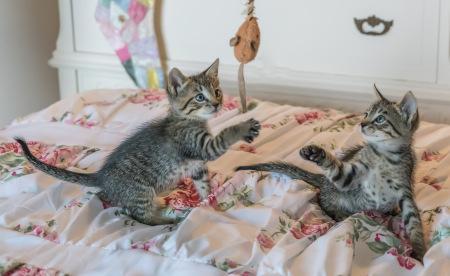Katzen spielen