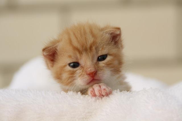 neugeborene Katze