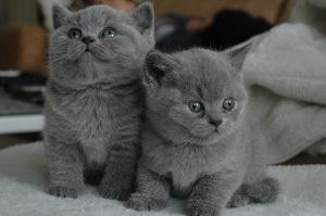 Katzenkinder sollten spezielles Junior bzw. Kitten Futter bekommen