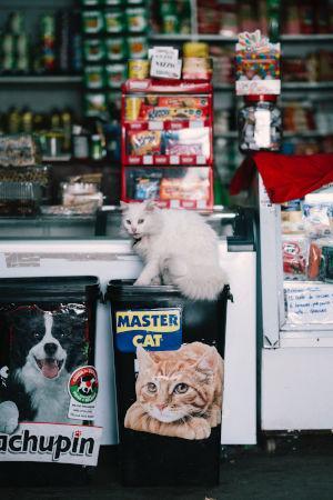 Supermarktregale mit unnötig vielen Katzenfutter-Spezialprodukten