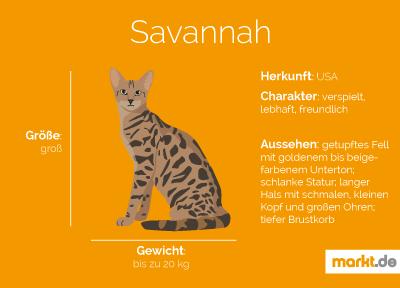 Savannah Katze Rasseportrait