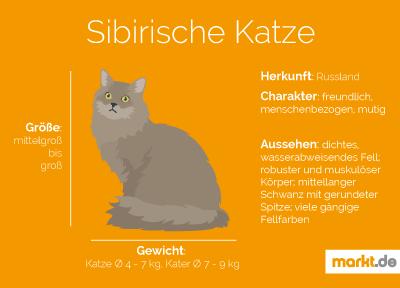 Grafik Sibirische Katze Portrait