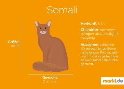 Grafik Somali Portrait