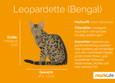 Grafik Rasseportrait Leopardette