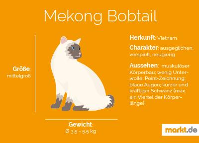 Rasseportrait Mekong Bobtail