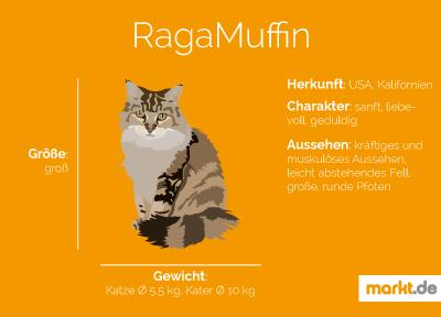 Grafik Rasseportrait RagaMuffin
