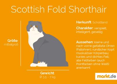 Grafik Rasseportrait Scottish Fold Shorthair