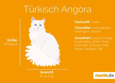 Türkische Angora Portrait