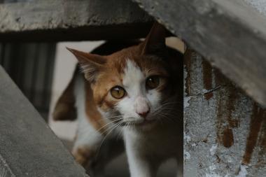 Bild Versteckte Katze