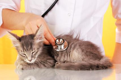 Bei Unverträglichkeiten sollte man immer den Tierarzt aufsuchen.