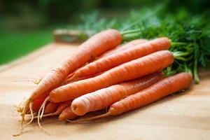 Bild Ridgeback Meerscheinchen Karotten