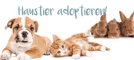 Haustier adoptieren!