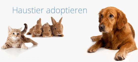 Haustier adoptieren