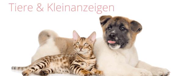 Tiere & Kleinanzeigen