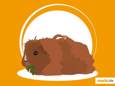 Grafik Alpakameerschweinchen im Portrait