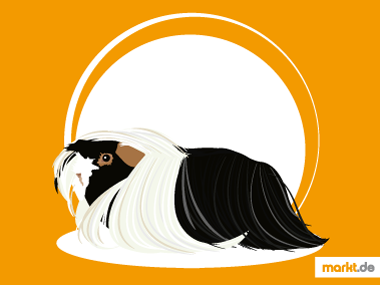 Angora Meerschweinchen
