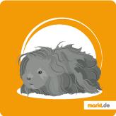 Lunkarya Meerschweinchen